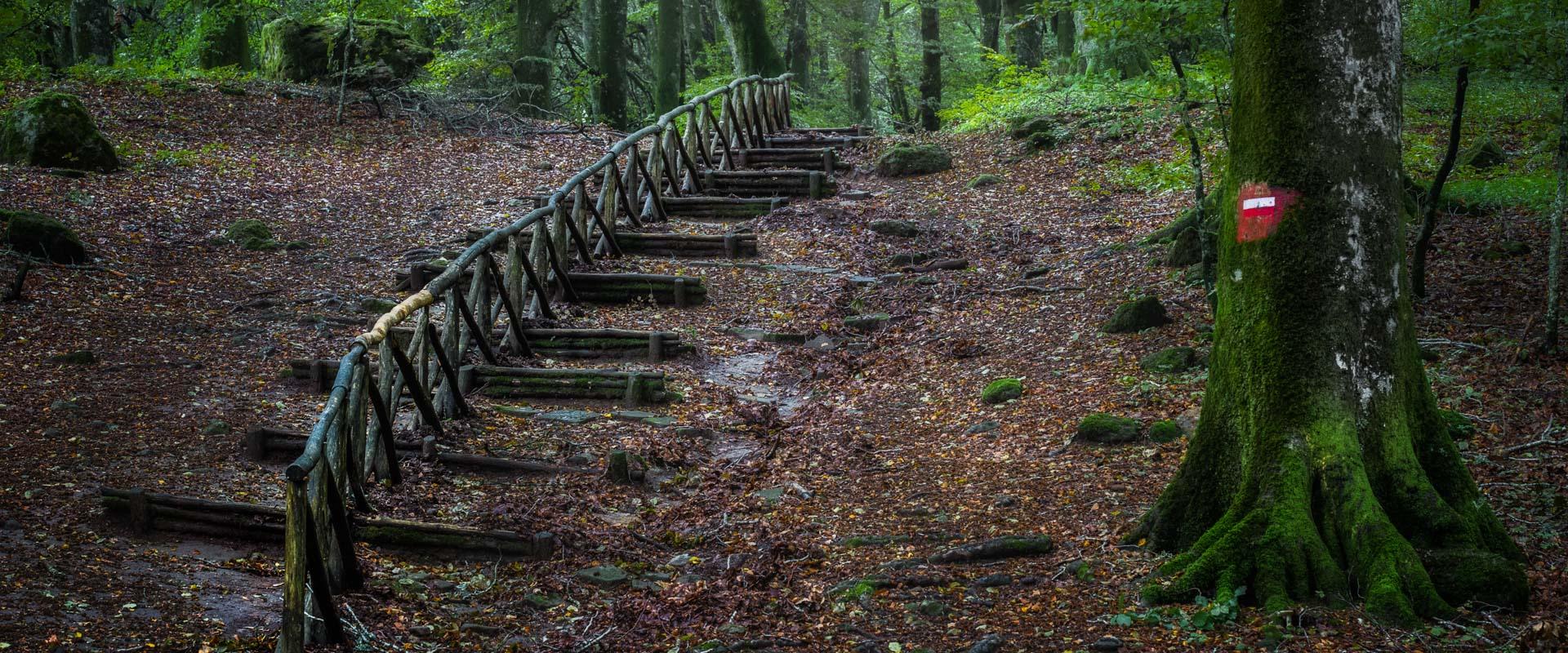 Slider Visitare le foreste - 3