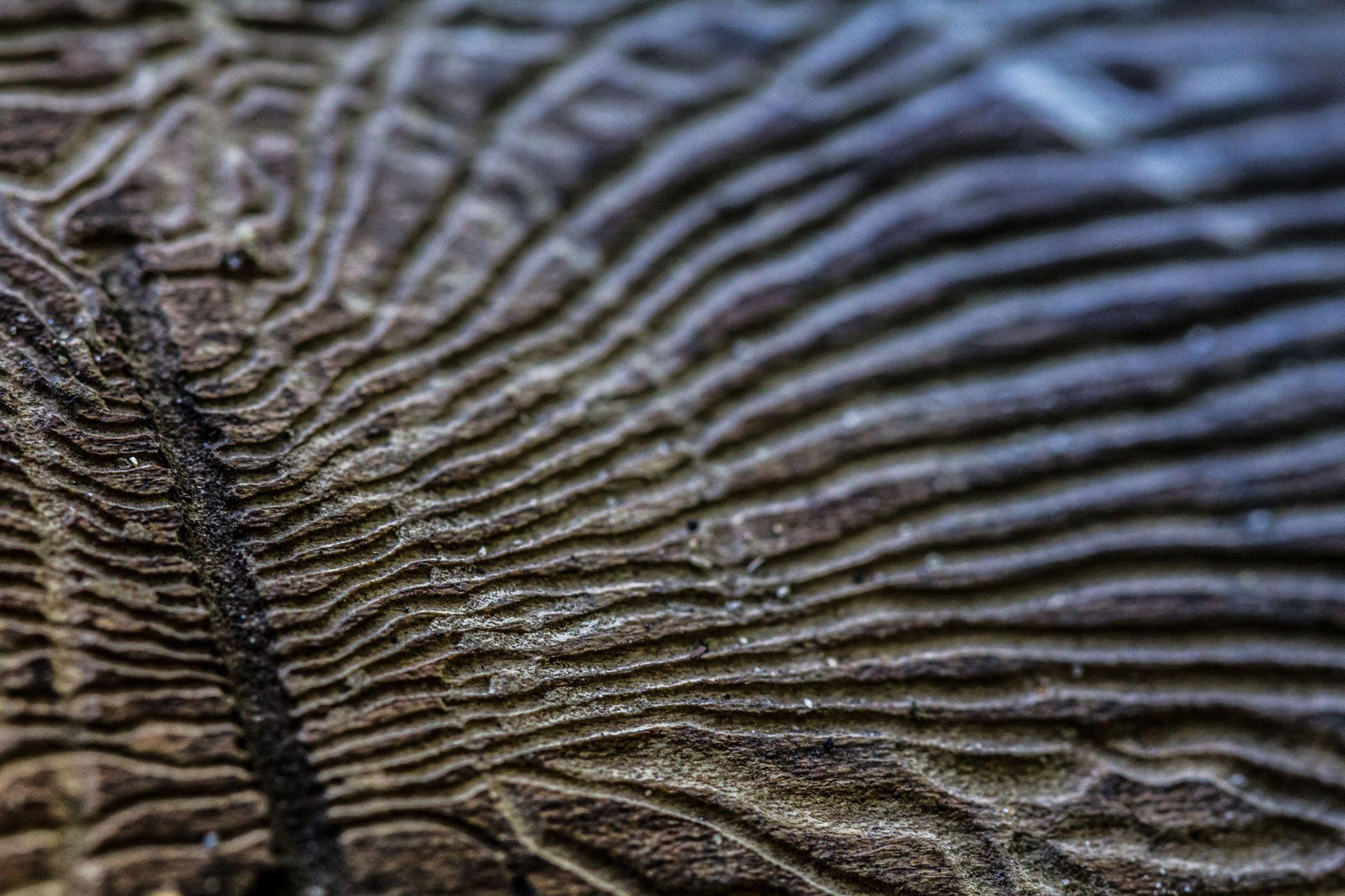 Dal legno morto, la vita della foresta