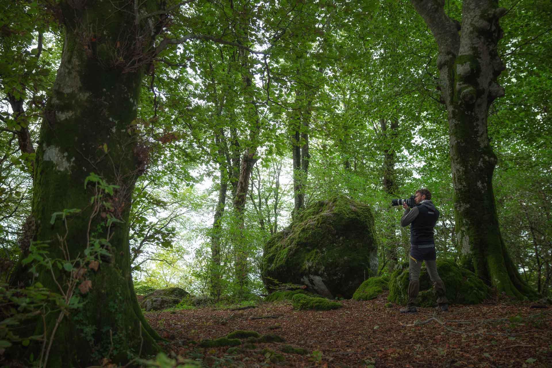 Viaggio nell'Italia delle antiche foreste