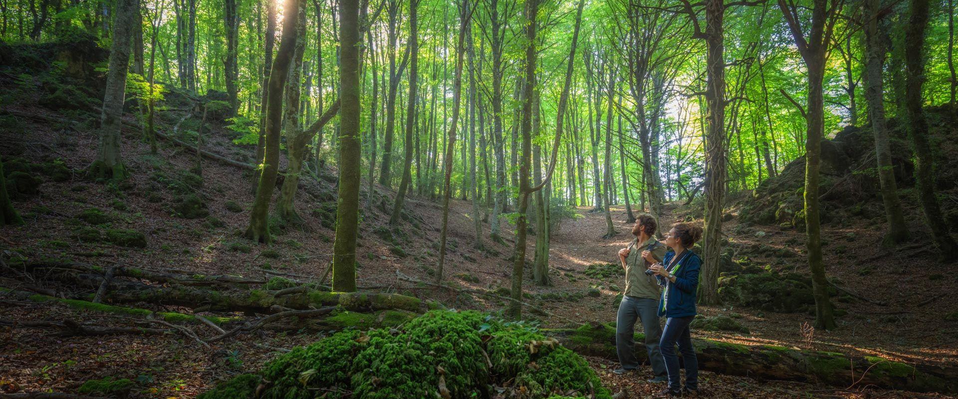 Slider Visiting the forests - 6
