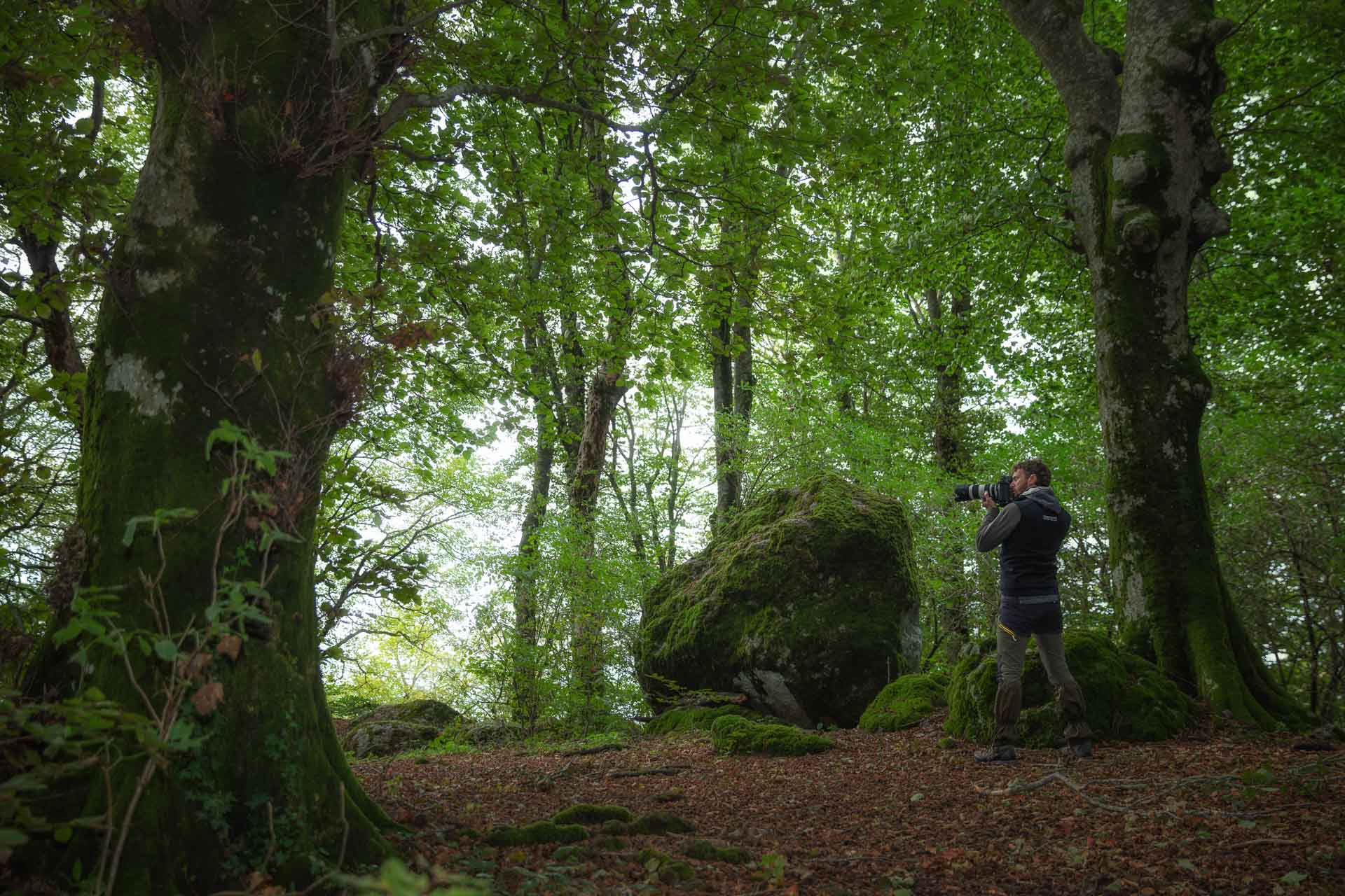 Journey to the Ancient Forests of Italy